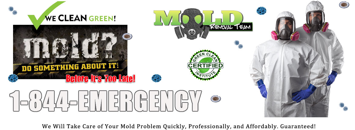 Michigan-Mold-Removal-Testing-Remediation